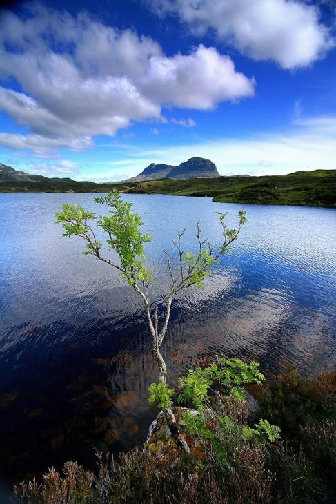 A rowan taking root by the side of Loch an Leòthaid. Photo © Chris Goodman.