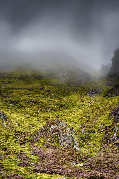 The team working in the misty gully. Photo © Chris Puddephatt.