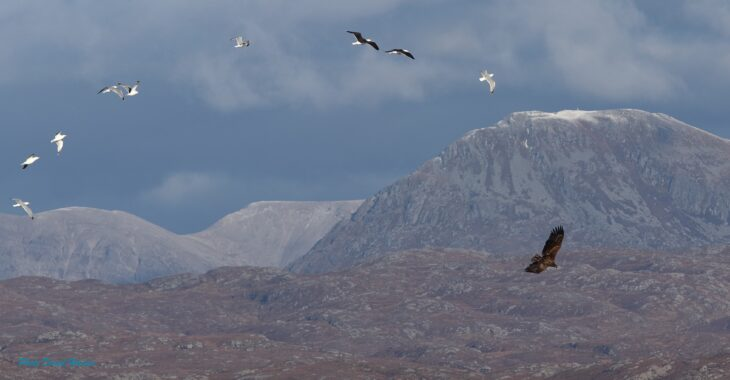 sea eagle over ben stack